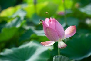 flowers-1113820_640