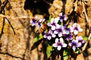 flowers-1371305_640